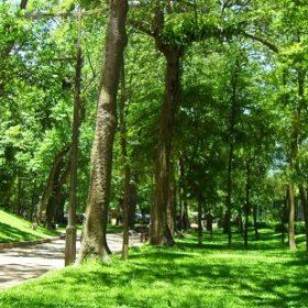 Cây bóng mát Khu đô thị TMS Grand City Phúc Yên